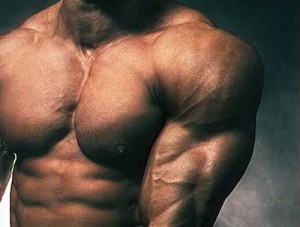 Ecdysteroids – Testosterone – No – but Muscle – YES